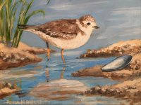Plover and Shell