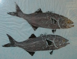 Two Bluefish