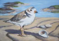 Plover and Slipper Shell