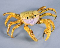 Ghost Crab - Yellow