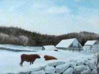Oxen in Winter