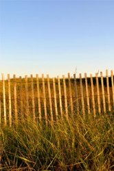 Vineyard Beach Grass & Fence