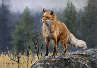 Linda Besse - Out Fox