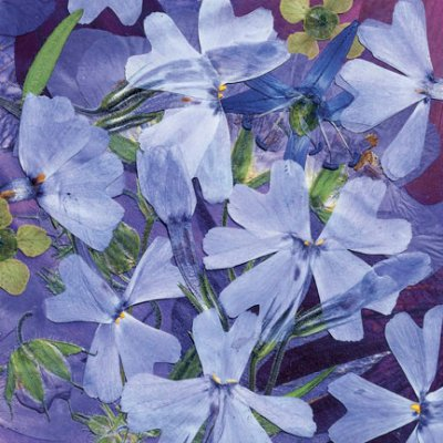 Peggy Turner Zablotny - Purple Haze